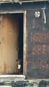 Dog Abandoned House Pic